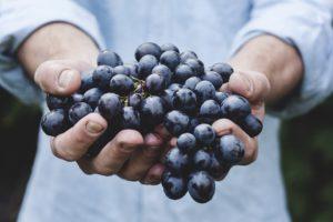 jobb véráramlás szőlőmagolaj kúra után