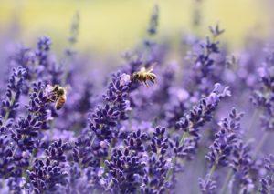 Válogatott méhpempő boltok friss méhpempő vásárlásához